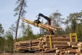 Итальянцы выделят 2,5 млрд. рублей на переработку древесины на Камчатке