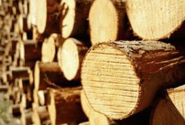 Что нужно знать о древесине?