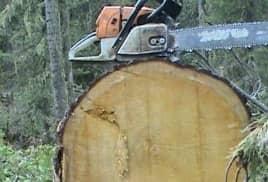 Дешевая древесина: для кого?